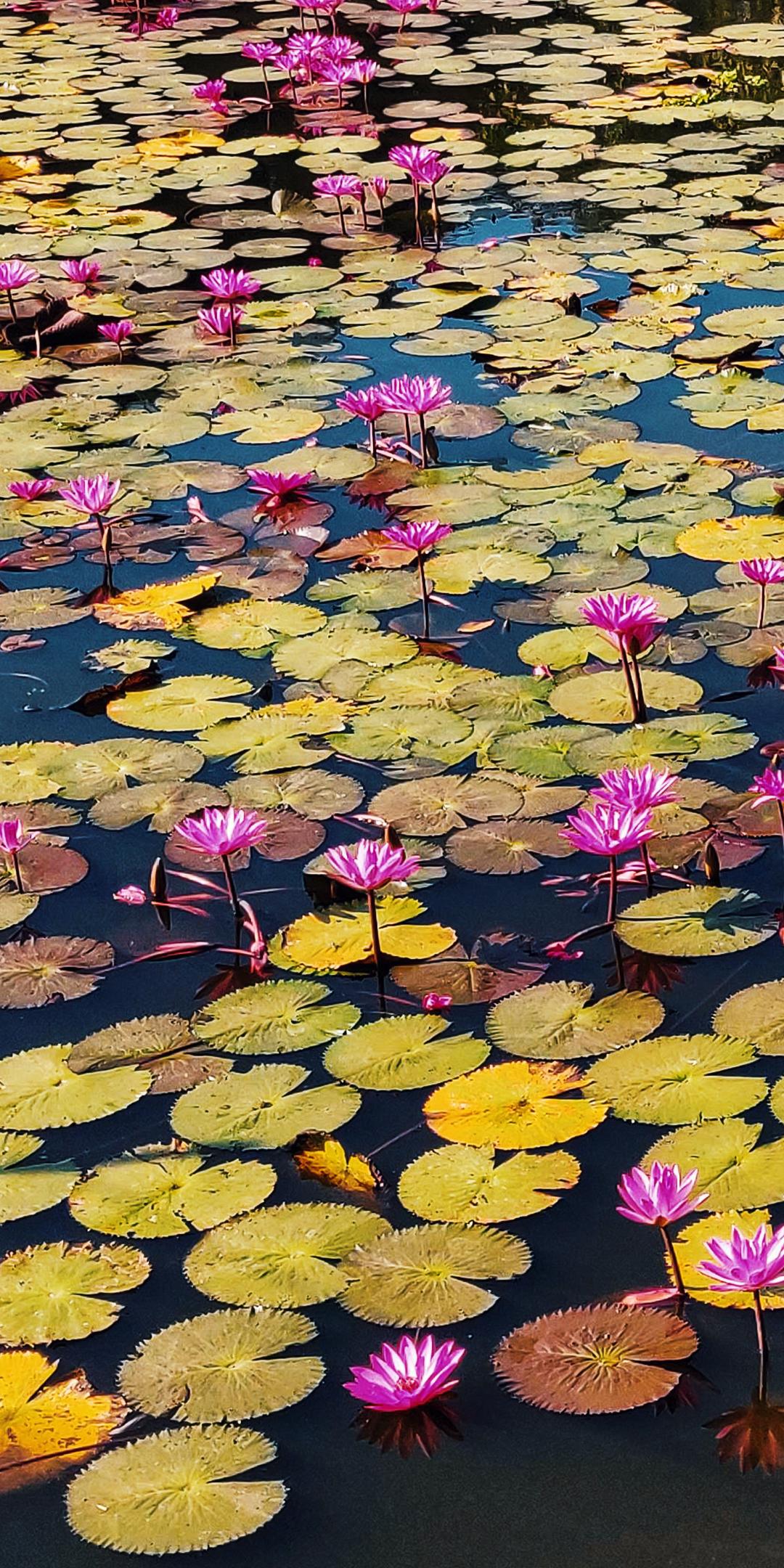 Bangladesh-Mariya.jpg