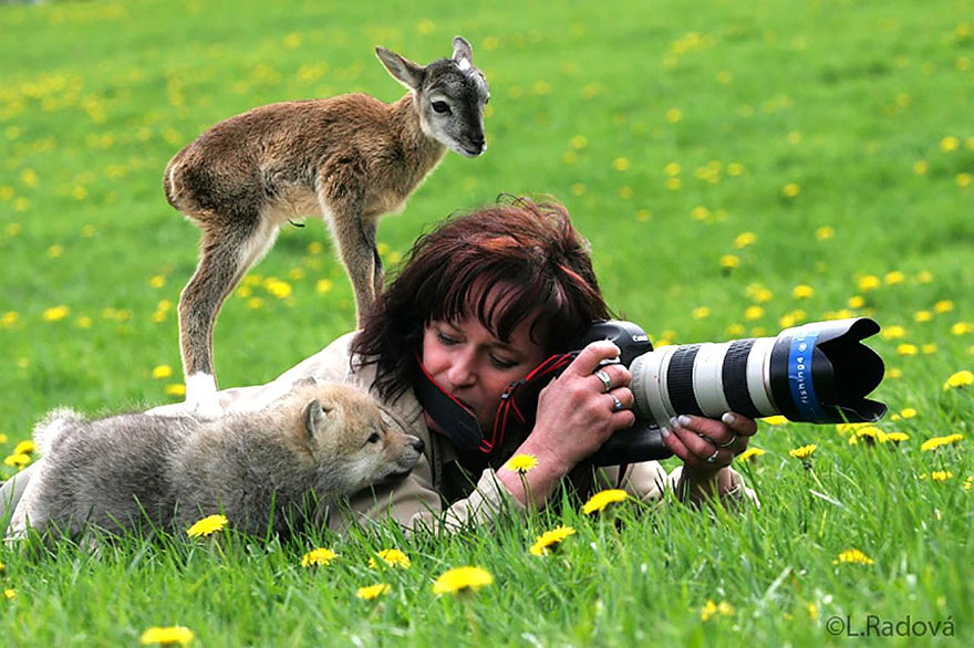 animals-with-camera-helping-photographers-7__880.jpg
