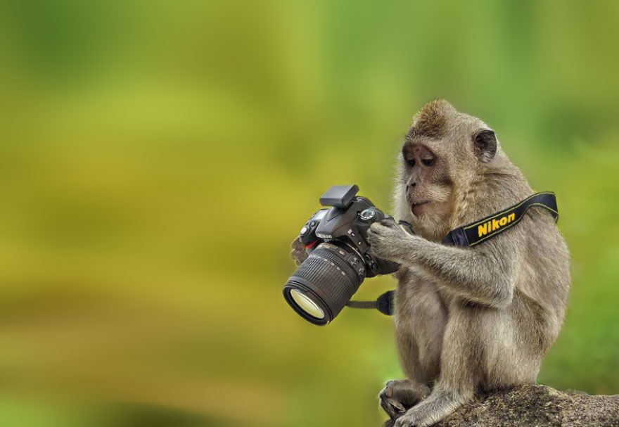 animals-with-camera-helping-photographers-18__880.jpg