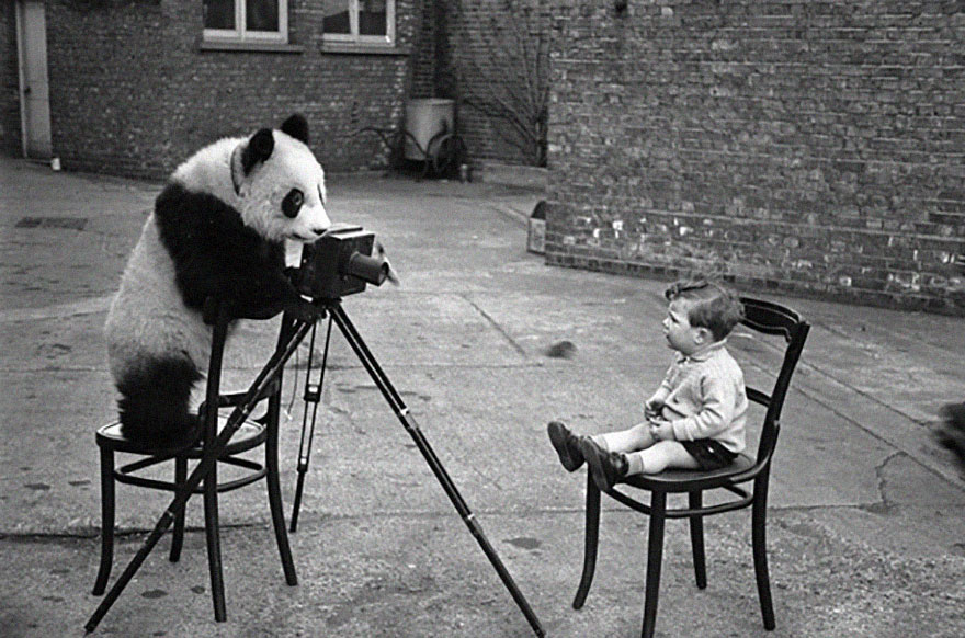 animals-with-camera-helping-photographers-15__880.jpg