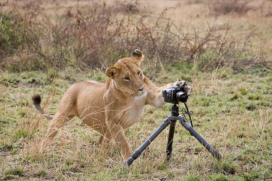 animals-with-camera-helping-photographers-28__880.jpg