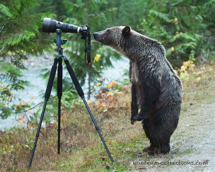 animals-with-camera-helping-photographers-9__880.jpg