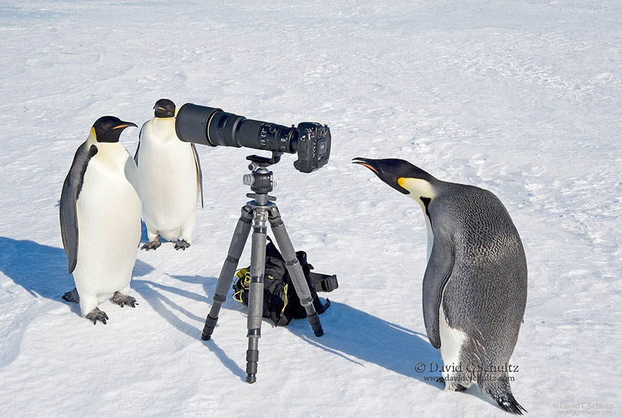 animals-with-camera-helping-photographers-5__880.jpg