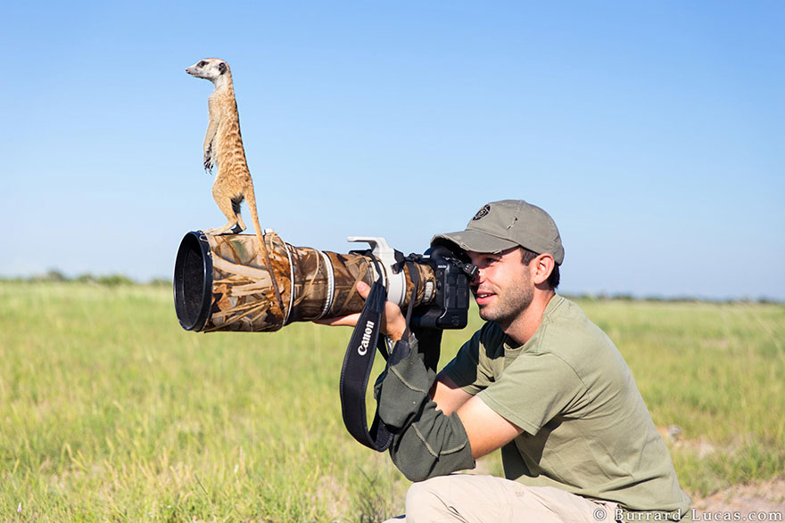 animals-with-camera-helping-photographers-2__880.jpg