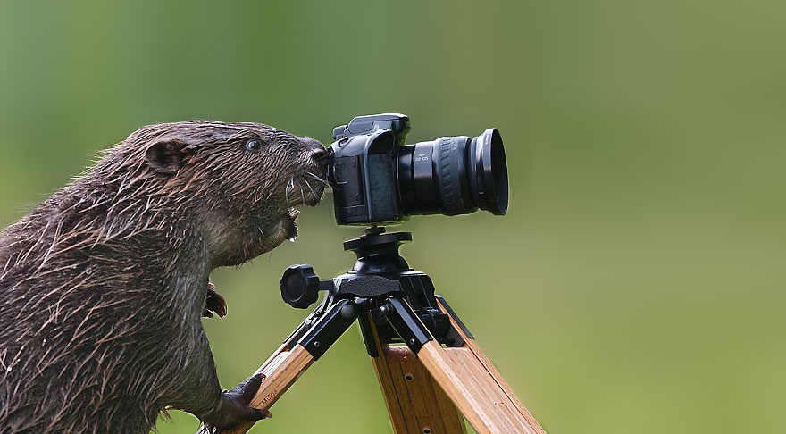 animals-with-camera-helping-photographers-17__880.jpg