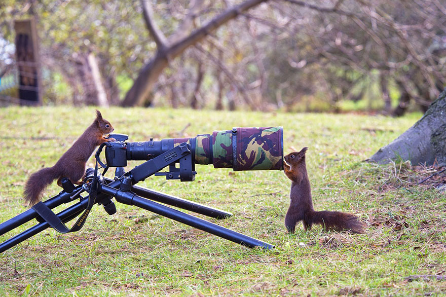 animals-with-camera-helping-photographers-14__880.jpg