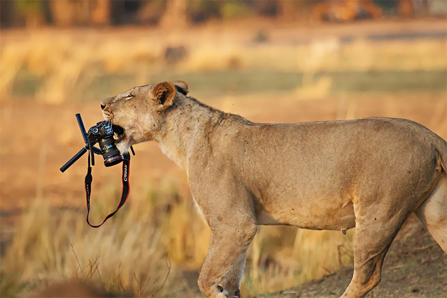 animals-with-camera-helping-photographers-30__880.jpg
