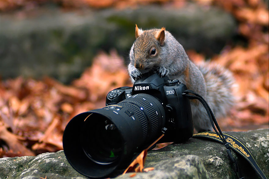 animals-with-camera-helping-photographers-29__880.jpg