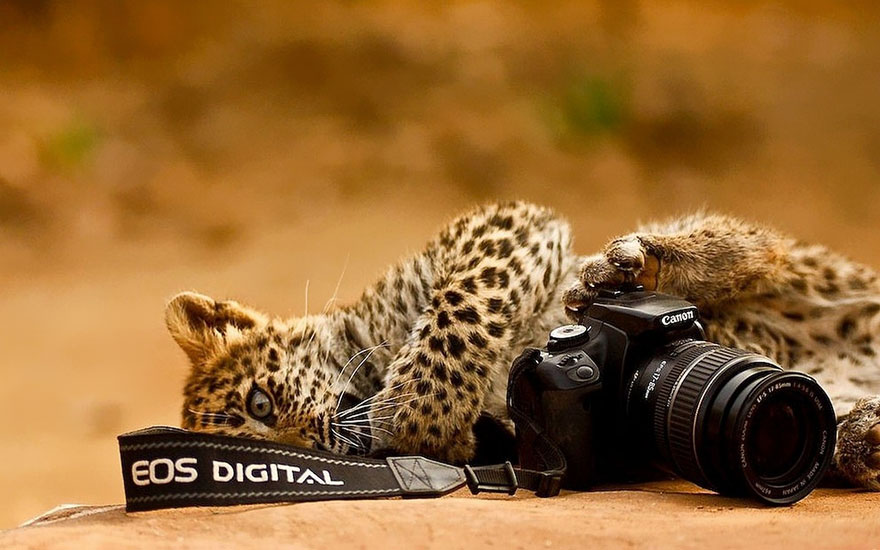 animals-with-camera-helping-photographers-23__880.jpg